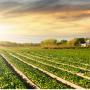 Agro-Industrias